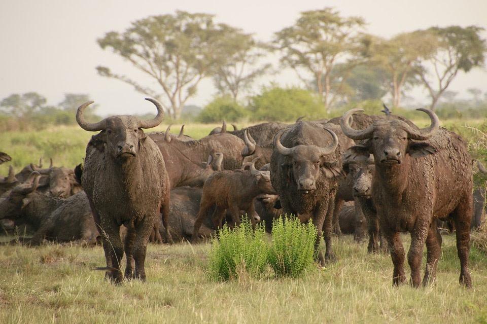 Kidepo Uganda Wildlife Safari