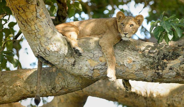 Affordable Solo Traveler Safaris