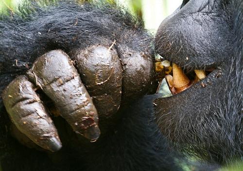Uganda Rwanda Gorilla Tour