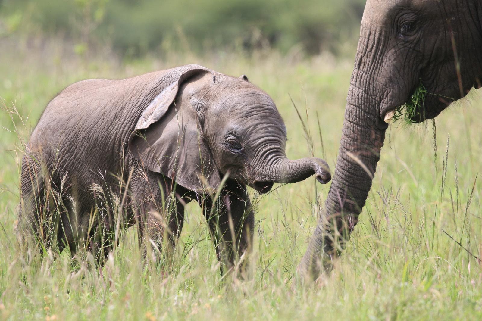 Safari Holidays in Africa