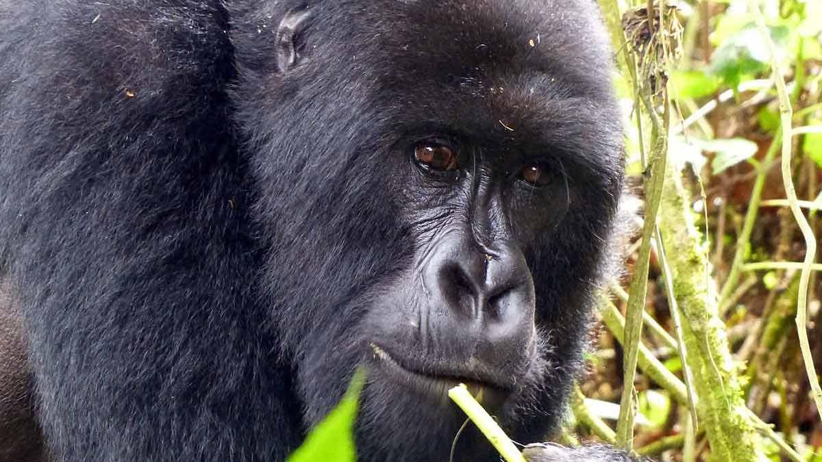 Africa Primates Safaris Uganda