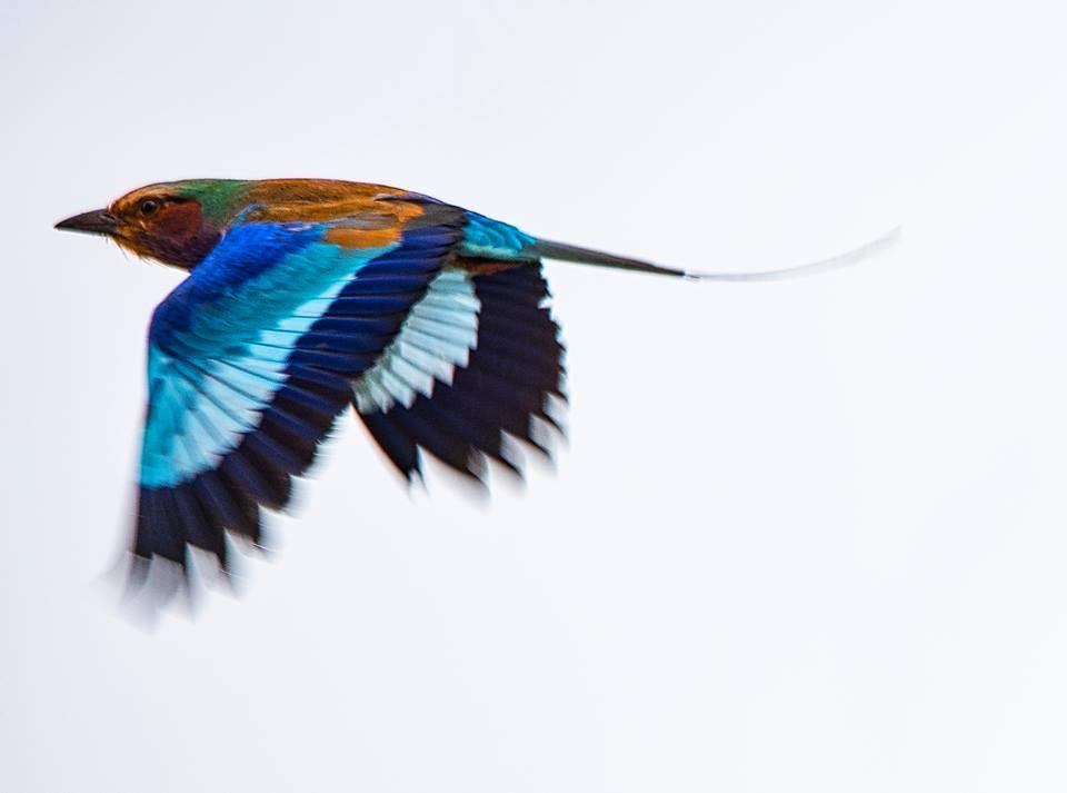 7 Days Birding Safari-Uganda