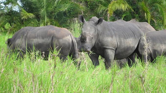 Uganda Adventure Holidays Safari
