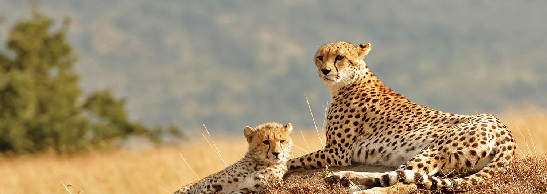 Discover more on your Uganda safari trip with us!