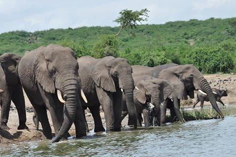 Uganda Wildlife holiday