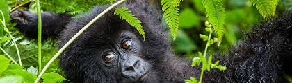 Rwanda travel Packages