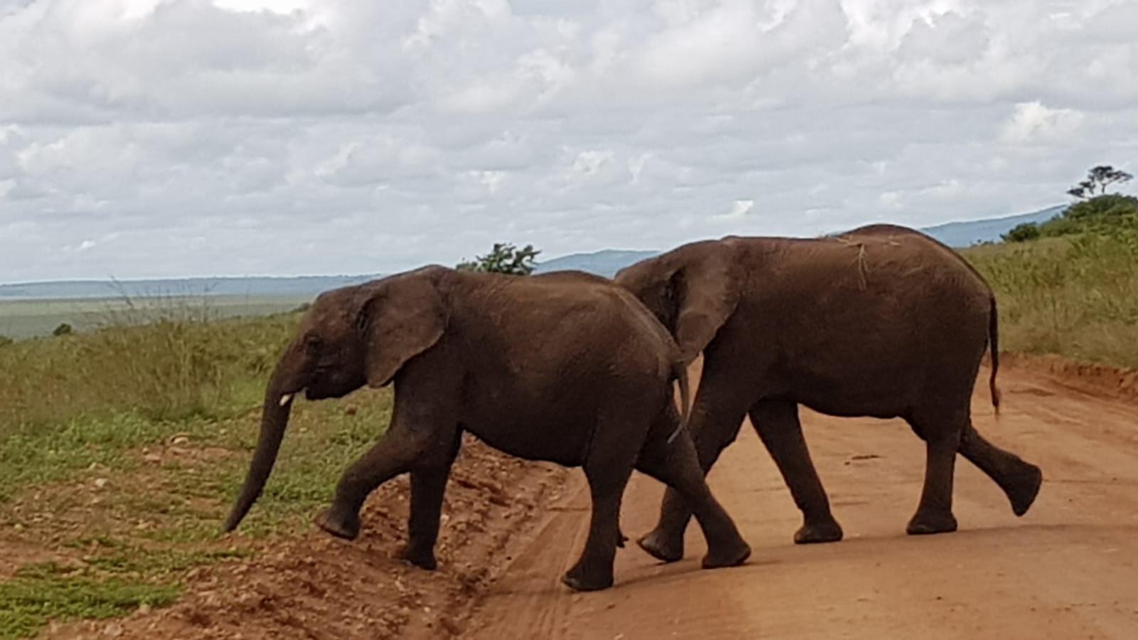 1 Day Tanzania Tours