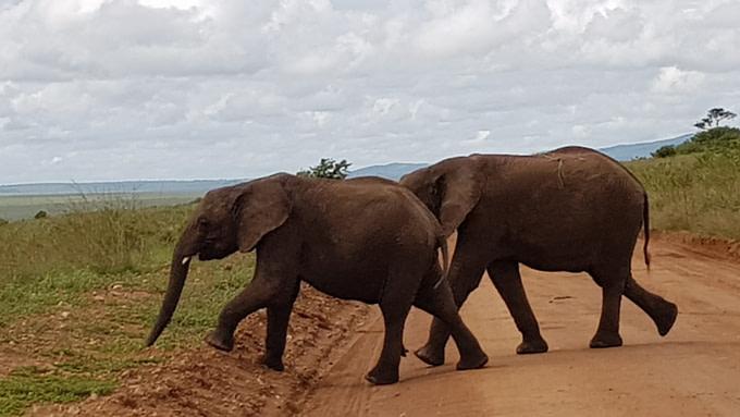Safari holiday in Tanzania