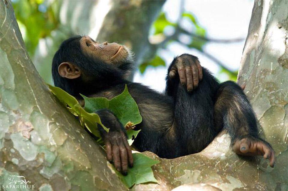 5 Days Rwanda Primates