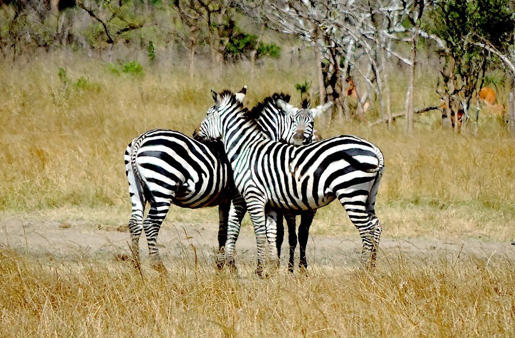 Rwanda wildlife Safari