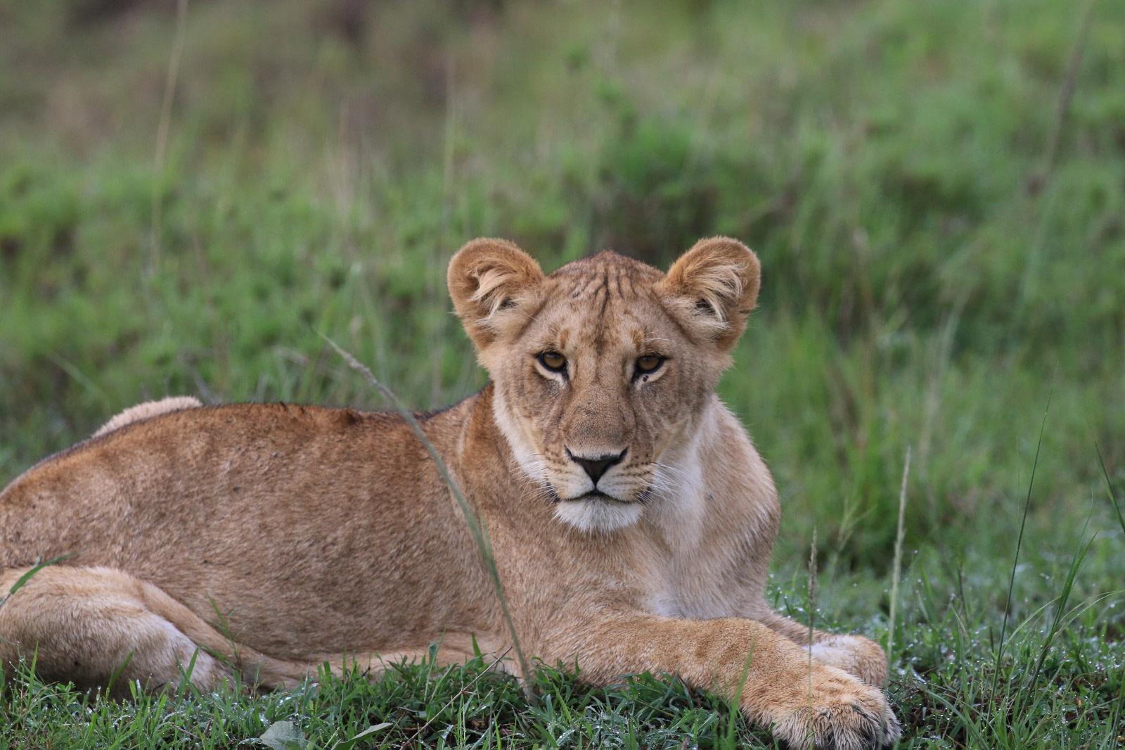 The Best of Uganda Safari