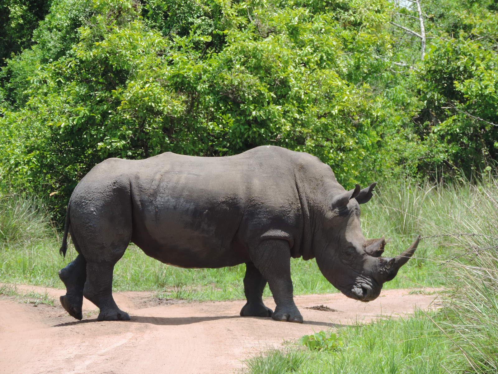 Gorilla Safari Uganda, Uganda Safari Holiday, Uganda Safaris Tour, Budget Safari Uganda,