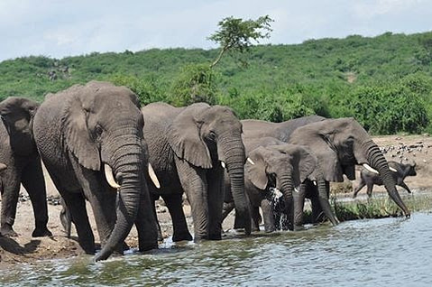 Uganda Wildlife holiday