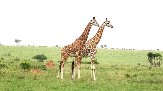 Uganda Wildlife Adventure Safari
