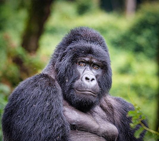 Uganda Safari and holiday tours
