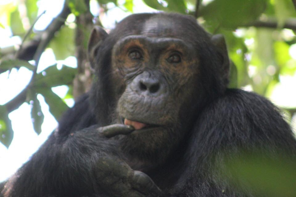 Rwanda tours and travel Packages