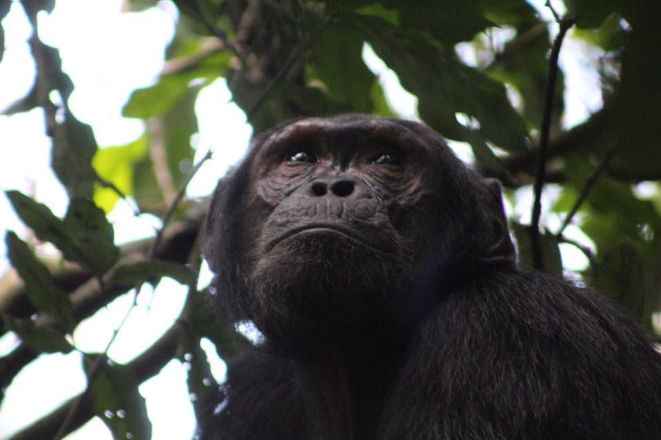 Budget Uganda Gorilla Trekking Tours