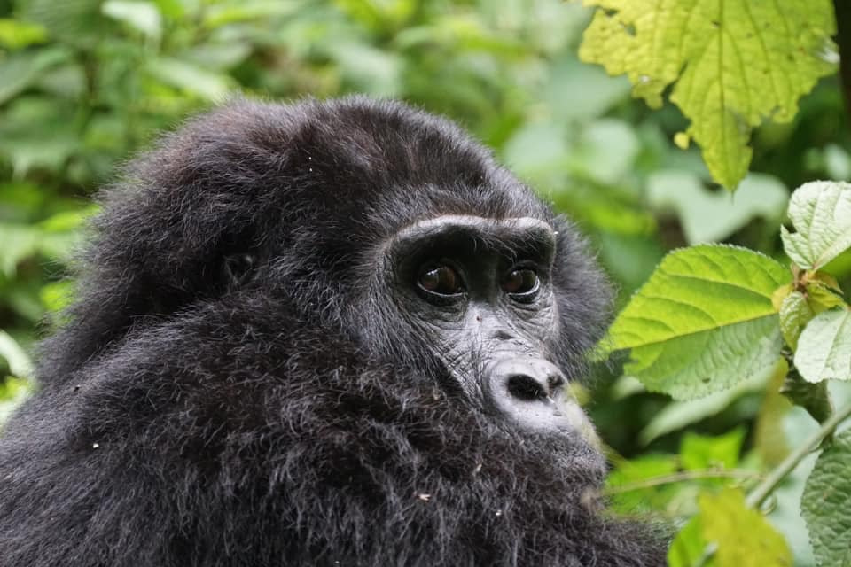 Uganda Beyond Gorilla Trekking
